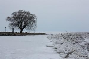 درخت و دریاچه