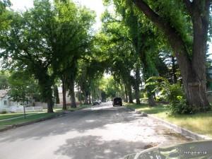 یک محله در سسکتون