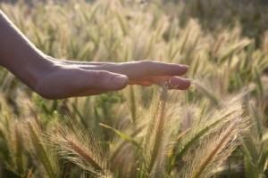 کانادا و کشاورزی