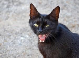 گربه سیاه نحس؟